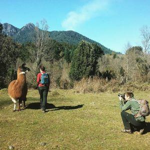 Llama Trekking